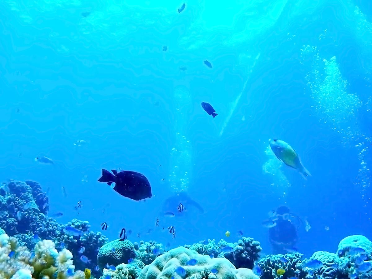 可愛い小さな魚たち