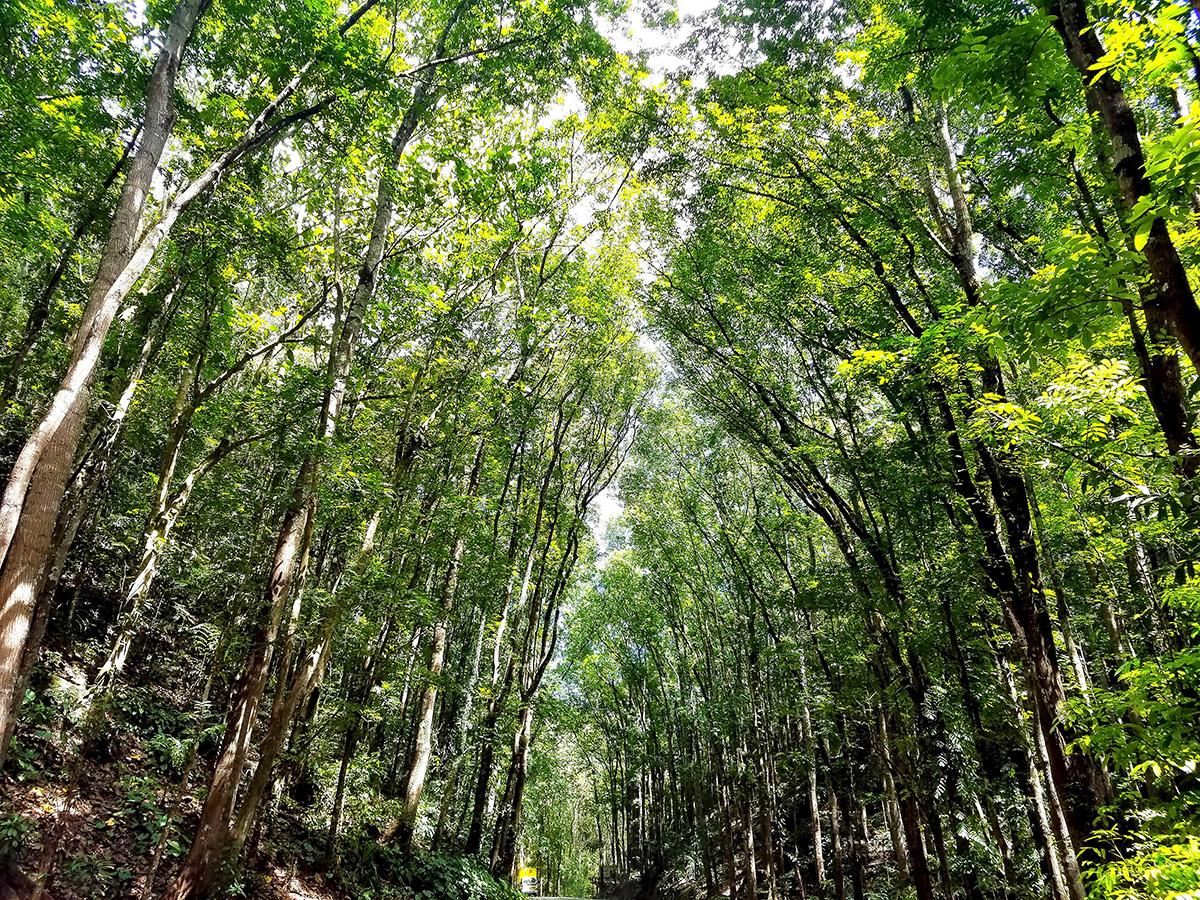 木々に覆われた道